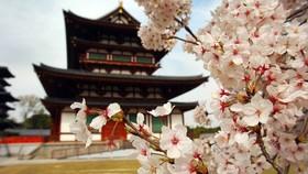 日本早癌筛查