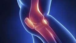 新研究为骨缺陷疾病治疗找到重要干细胞来源