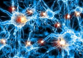 日本神經系統疾病轉診